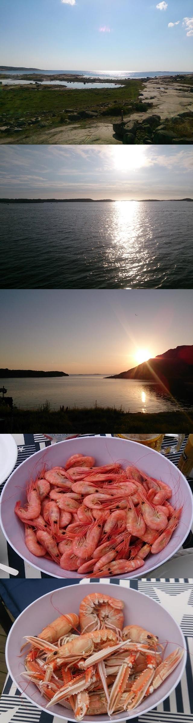 bohuslän-collage-skaldjur-solnedgång