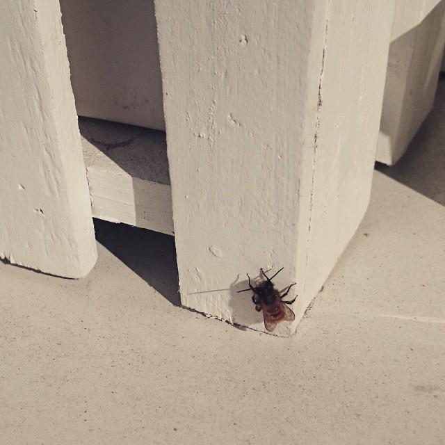 balkong insekt vår